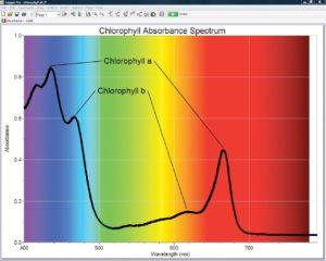 дослідження хлорофілу на уроці біології